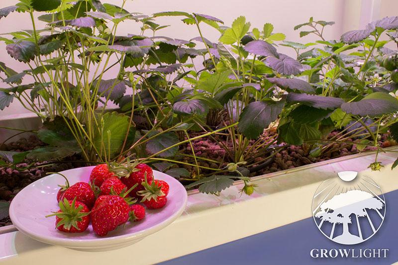 Pěstování rostlin v kuchyni, bytě - Growlight