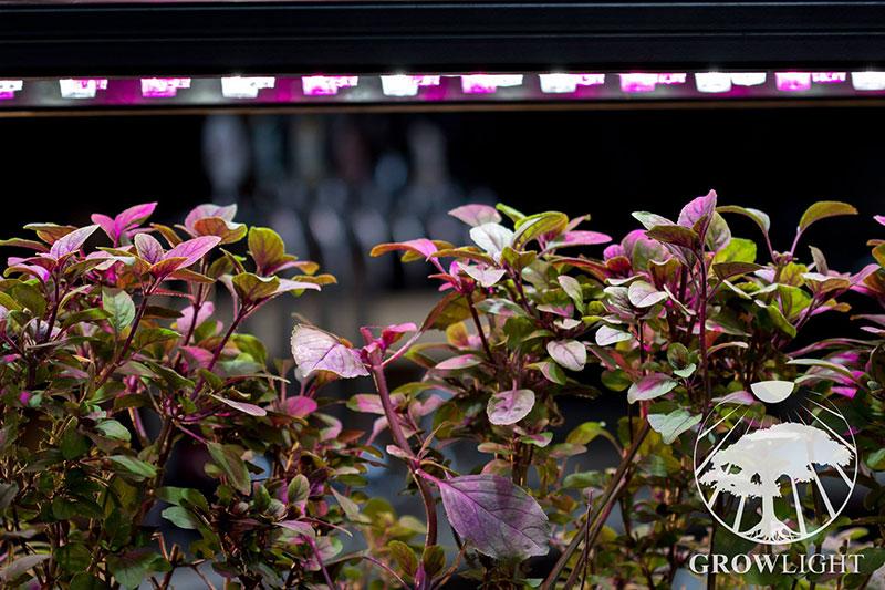 Pěstování rostlin v bytě - Growliht