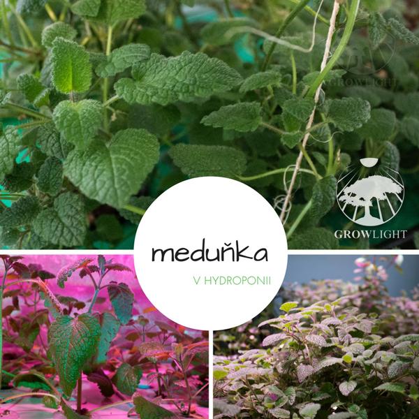 medunka1
