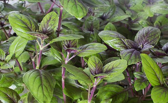 Moderní a efektivní způsob celoročního pěstování rostlin