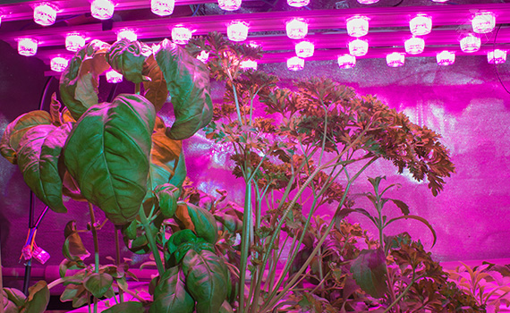 Pěstební LED osvětlení pro umělé přisvětlení rostlin, sazenic a klíčků