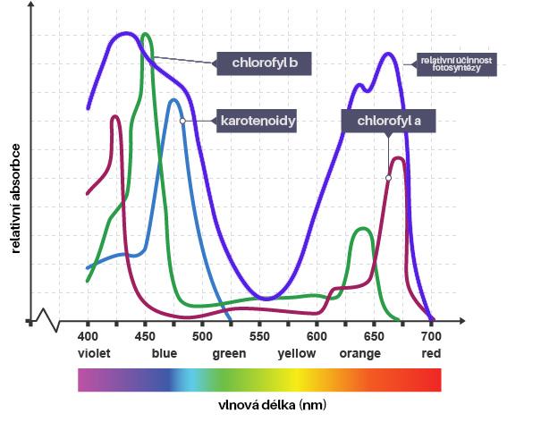 Absorbce světelné energie rostlinami
