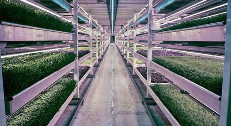 Hydroponická farma z bývalého krytu z druhé světové války