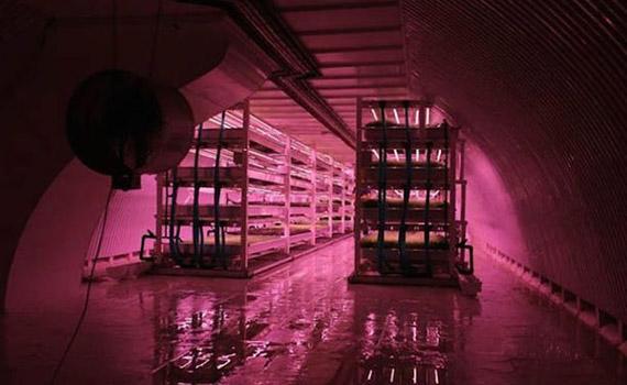 Kryt po instalaci moderní hydroponické LED farmy
