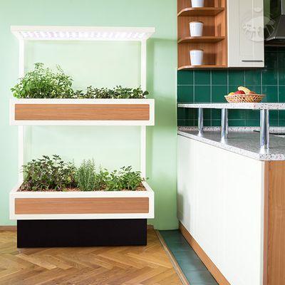 Kuchyňské bylinky Growlight