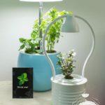 Rostliny, jako dokonalé interiérové doplňky do každé domácnosti