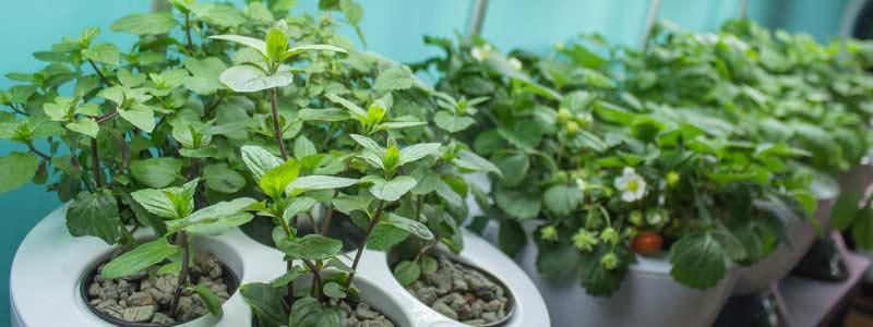 My interior Garden 6 pro celoroční pěstování bylinek