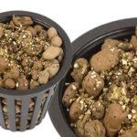 U bylinek sázejte semínek větší množství