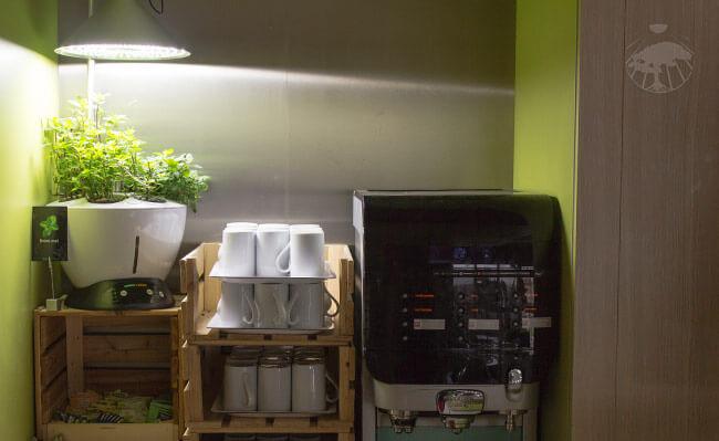 Zahrada na snídaňovém rautu v hotelu pro přípravu čajů z čerstvých bylinek