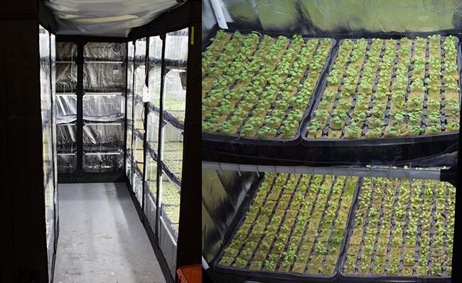 Pěstební stany se stabilním klima použité jako inkubátory pro produkci hydroponických sazenic bylinek a salátů
