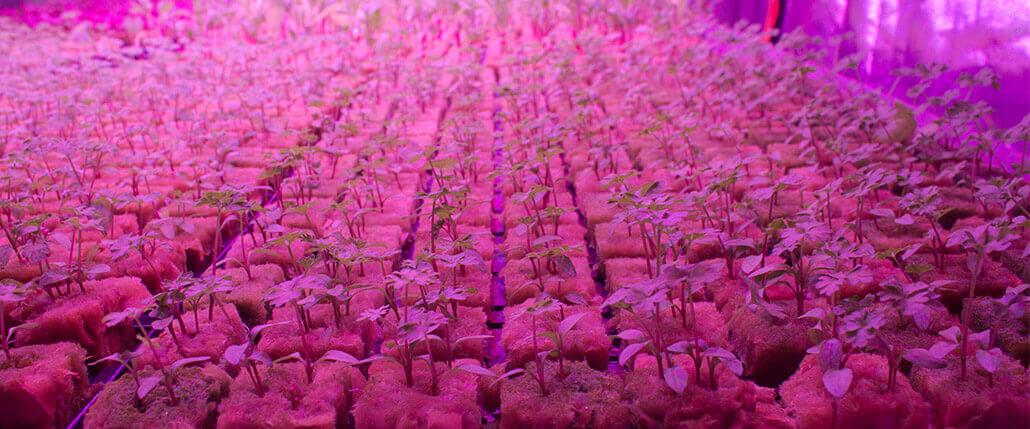 Řídicí jednotka pro ovládání hydroponického systému pro ekonomické pěstování rostlin