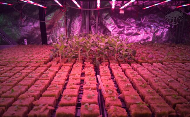 Minerální vata pro klíčení semínek pěstování rostlin a kořenění řízků