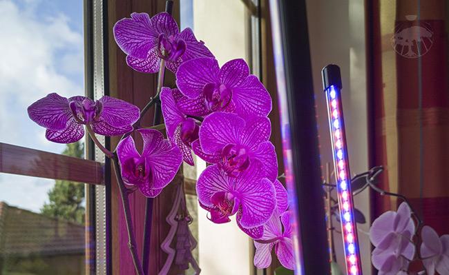 Osvětlení pokojových rostlin v bytě bez světla