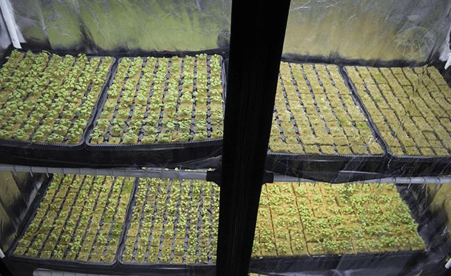 Systém pro domácí hydroponické pěstování zeleniny