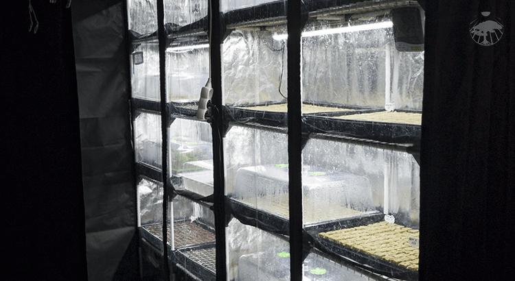 Vertikální domácí pěstírna zeleniny a bylinek pro pěstování v bytě