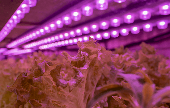 LED_GROW_LIGHT_INDOOR_FOOD_PRODUCE_YEAR_ROUND.png