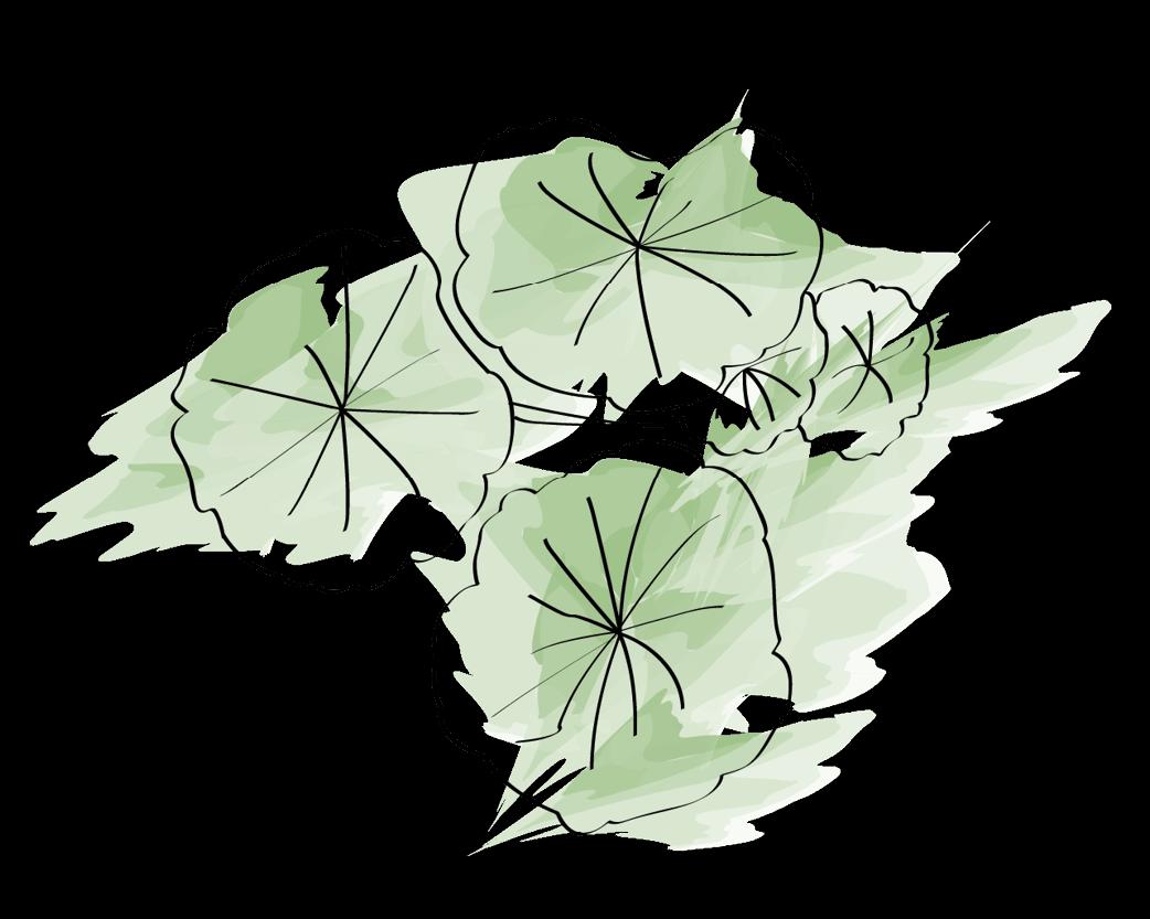 lecivka-pupecnik-asijsky.png